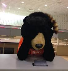 Billy Bear sits ashamed of what he's done to the student population.