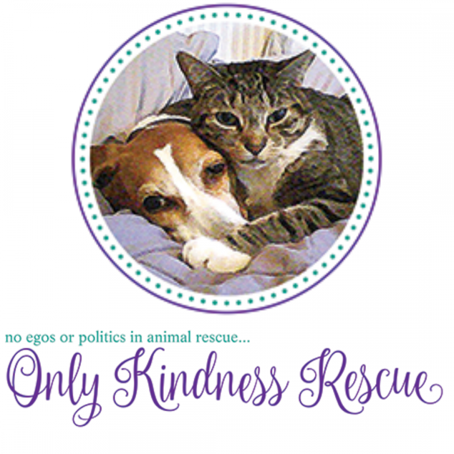 Saved+from+CATastrophe%3A+Only+Kindness+Rescue+and+William+Paterson+University